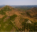 Dead trees in the southern hills killed by the mountain pine beetle.