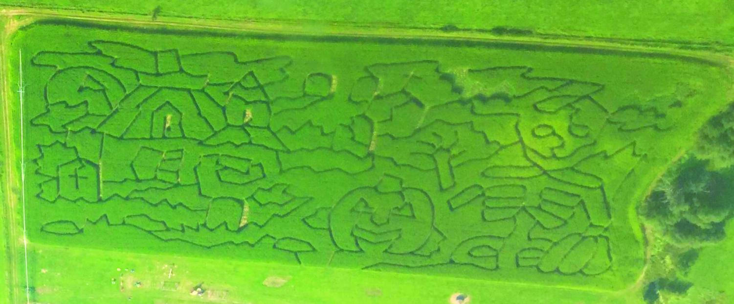 An aerial view of the corn maze displays this year's design. Every year, the Spearfish Corn Maze and Pumpkin Patch redesigns the corn maze pattern. photo retrieved the Spearfish Corn Maze and Pumpkin Patch Facebook page